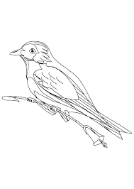 Blue Bird Coloring Pages Eastern Bluebird Coloring Page Animal Pages