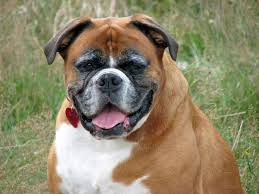 Image result for the most beautiful dogs