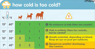 This Chart Tells You When Its Too Cold To Walk Your Dog
