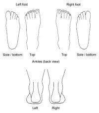 Itec Reflexology Blank Foot Chart Itec Reflexology Blank Foot Chart Foot Massage