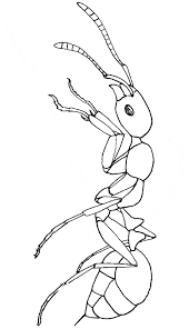 Small Picture Fire Ant coloring page Animals Town animals color sheet Fire