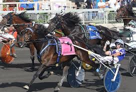 that s my specialty trotters i live and breathe to train a trotter especially a filly it s more satisfying for me to train a