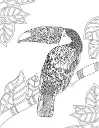 Toucan Adult Colouring Page Colouring In