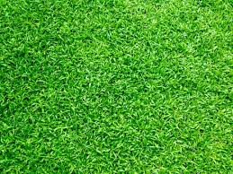 grass. Plain Grass Intended Grass Pexels