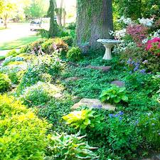 landscaping under trees easy landscaping ideas around trees