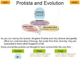 start kingdom protista like