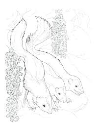 Skunk Coloring Page Skunk Coloring Pages For Kids Page Baby Spotted