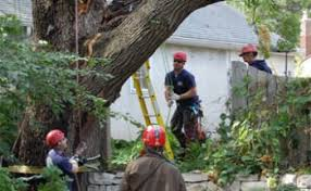 Tree Risk Assessment Evaluation In The Twin Cities