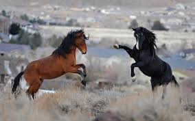 wild horses mustang wallpaper. Throughout Wild Horses Mustang Wallpaper