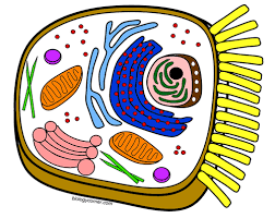 Small Picture Coloring Page Animal Cell Coloring Page Answers Coloring Page