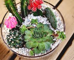 Small Picture DIY Projects Simple Cactus Garden Ideas Home Design And Interior
