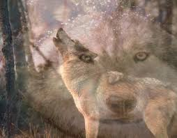 Manada: Guardianes del bosque - Página 2 Images?q=tbn:ANd9GcTdNjoPk7Ft26Yopsp72YrqH1D_Gk_3KzmN57POlHOYhG-yiBHYYQ