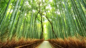 Landscape Bamboo Path Japan Nature Fence Forest