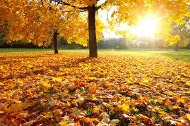 Resultado de imagem para as folhas caem
