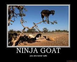 Goat Quotes Unique Quotes About Goat 48 Quotes