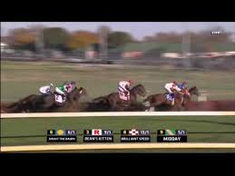 Breeders Cup Charts 2013 2011 Emirates Airline Breeders Cup Turf