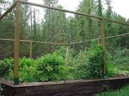 deer proof garden. Deer Proof Fencing - Probably Works On Kangaroos, Too Rabbits? Garden