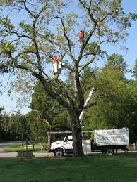 5 Types of Trees to Avoid | Angie's List