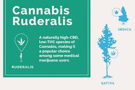 Sativa And Indica Chart Indica Cbd Effects