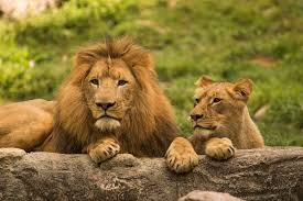in honor of this holiday enjoy limited time s on the heart of africa tour to get up close to these amazing animals