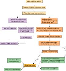 Renal Disease Pathophysiology Of Disease An Introduction