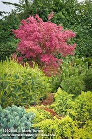Small Picture 625 best Trees Japanese Maple images on Pinterest Japanese