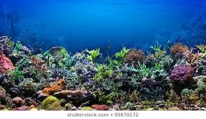 Aquarium Background Images Stock Photos Vectors