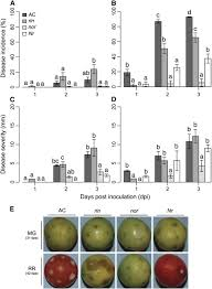 Ripening Regulated Susceptibility Of Tomato Fruit To