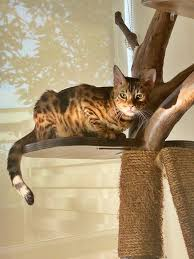 Catification: <b>Natural Cat Trees</b> — The Cat People (SG)