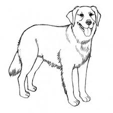 Small Picture Husky Puppy Coloring Pages Free Cute Puppy Coloring Pages Husky