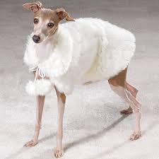 therefore insists of saying white fur coat is used for fashion hence for residents in these countries they need the coat for daily usages