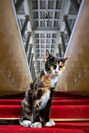 a photo essay furry custodians of the hermitage treasures 00 hermitage cats russia st petersburg 01 25 10 14
