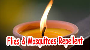 Quickly Get Rid of Flies And Mosquitoes Out of Your Home  Make This  Miraculous Candle (RECIPE)
