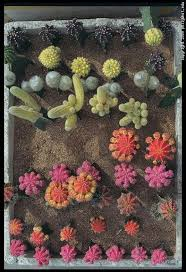 Small Picture 41 best Cacti images on Pinterest Cacti Plants and Succulent plants
