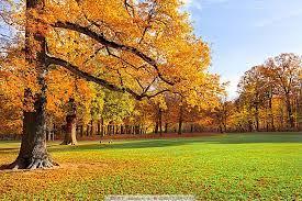 秋天树林草地风景摄影图片_自然风景_高清素材-图行天下素材网