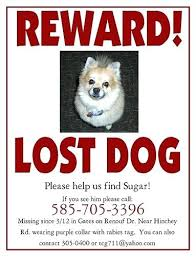 how to make lost dog flyers lost cat poster template how to make an effective missing pet with