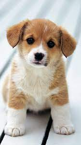 Puppy iPhone Wallpapers - Wallpaper Cave