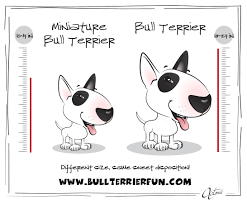 Bull Terrier And Miniature Bull Terrier Breed Information