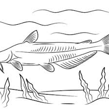 Small Picture Catfish Coloring Pages Free Coloring Pages Coloring Page Of