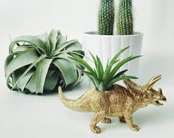 small plant for office desk. small plant for office desk