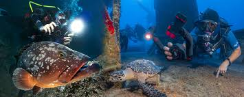 Incredible Underwater Lights How To Select An Underwater Diving Light Sealife Cameras