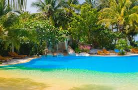 Beach entry lagoon style swimming pool with tropical landscaping