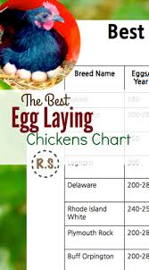 Best Egg Laying Chickens Chart Best Laying Chickens Best