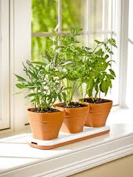 Kitchen Garden Planter Herb Pots Windowsill Herb Garden Planter Gardenerscom
