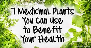 medicinal plants you can use to benefit your health