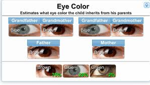 Baby Eye Color Possibility Chart Genetics Calculator For Eye Color Etc The Bump