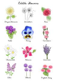 Flower Chart In English Edible Flowers Machita75s Recipes