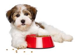 Merrick Dog Food How Much To Feed Video Simply For Dogs
