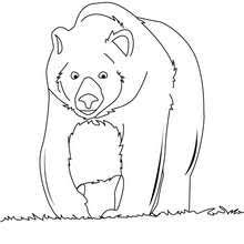 Small Picture Grizzly bear coloring pages Hellokidscom