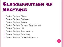Bacteria Classification Bacteria Classification Shape Staining Action Oxygen